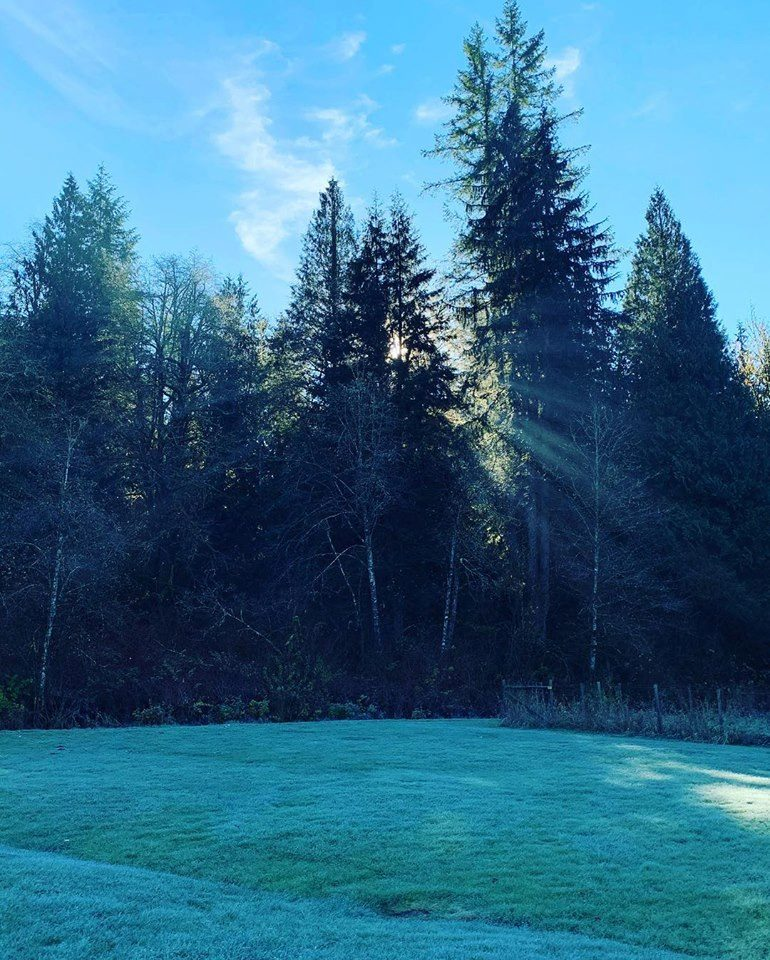 Trees and frosty grass